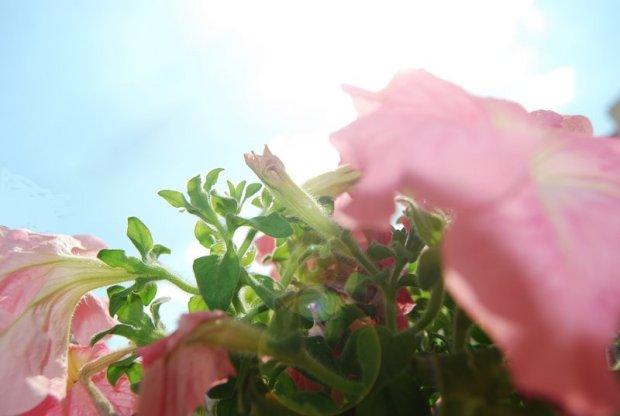 FLOWER WITH SUN
