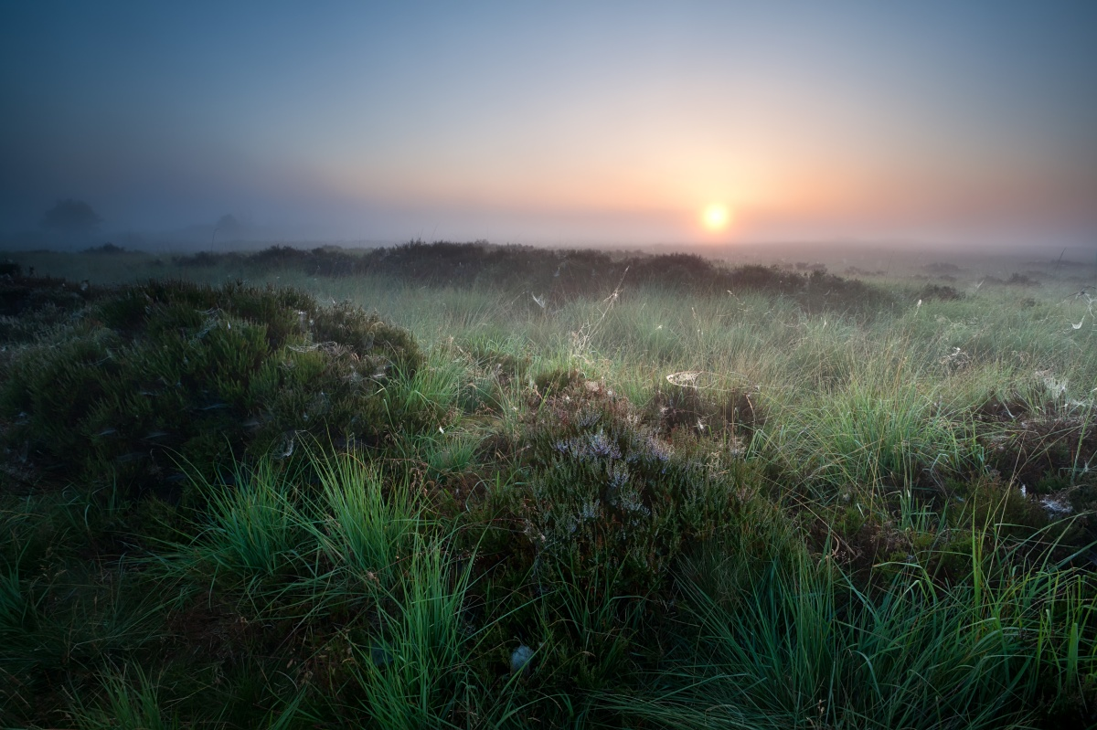 Morning Meadow, Sunrise Meadow, Awakening Vision, Morning Sunrise