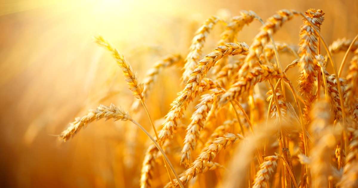 Fields of Gold, Sting, Song, Love, Ballade, Relationships, Commitment.